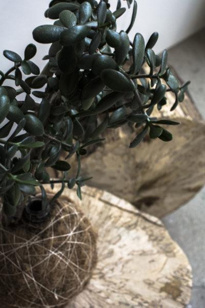 Kæmpe kokedama plantekugle