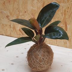Planteplanet
