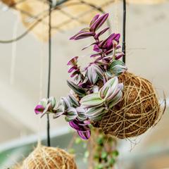 hængende plantekugle